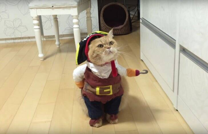 Cat Pirate Costume - http://coolthings.us