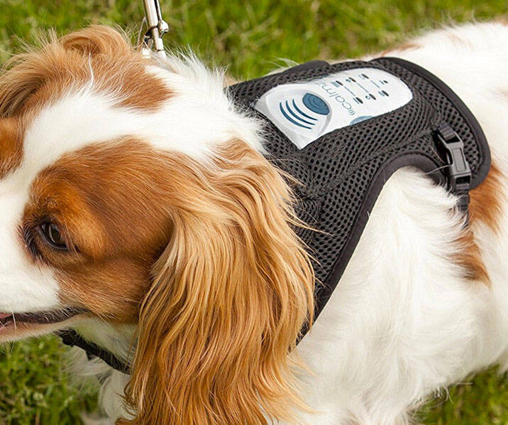Canine Anxiety Relief System - http://coolthings.us