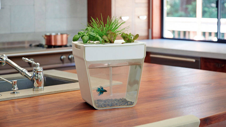 Aqua Farm - http://coolthings.us