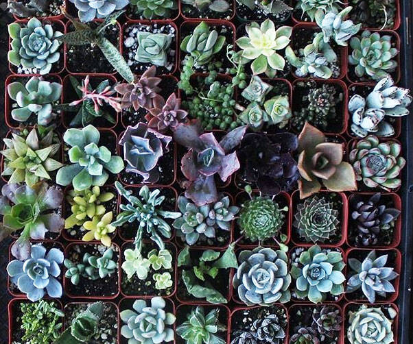 Assorted Succulent Plants Collection - http://coolthings.us