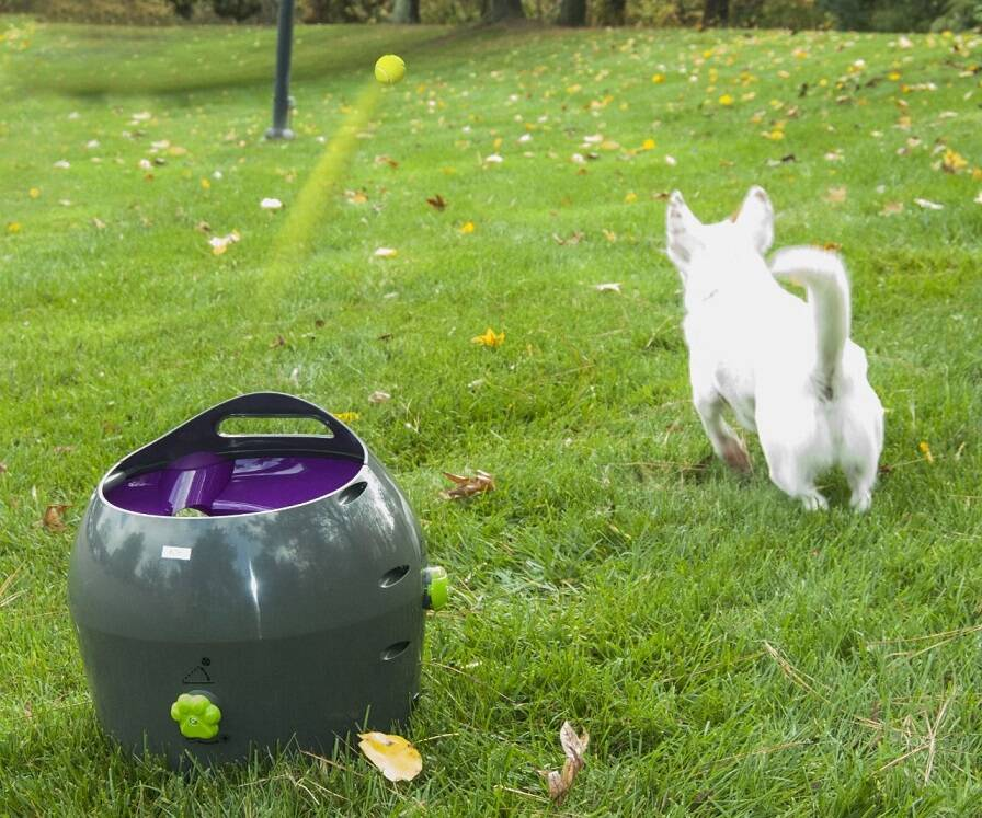 Automatic Pet Ball Launcher - http://coolthings.us