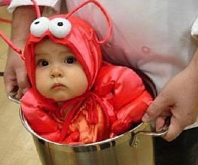 Baby Lobster Costume - coolthings.us