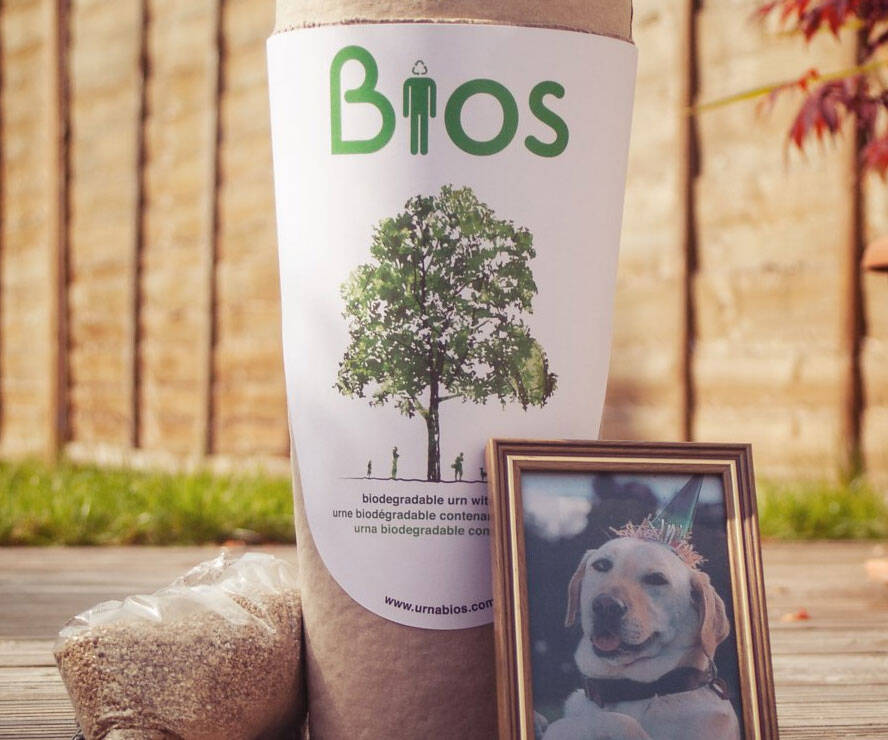 Biodegradable Pet Urn Tree Kit - http://coolthings.us