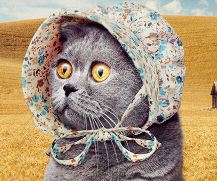 Bonnets For Cats - http://coolthings.us