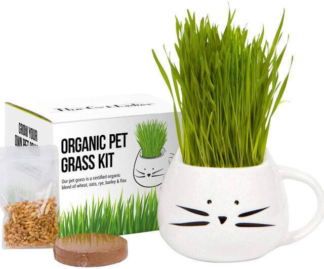 Cat Grass Growing Kit - http://coolthings.us