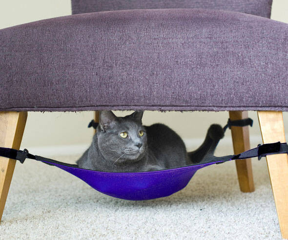 Cat Hammock - http://coolthings.us