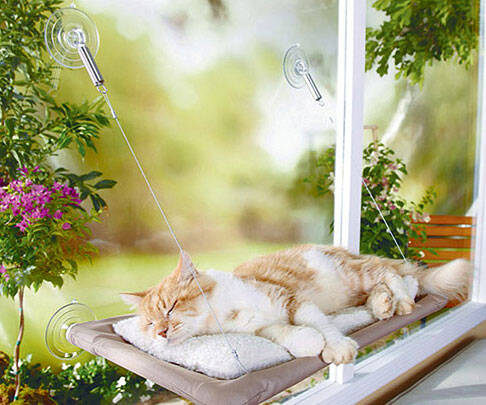 Cat Window Perch - http://coolthings.us