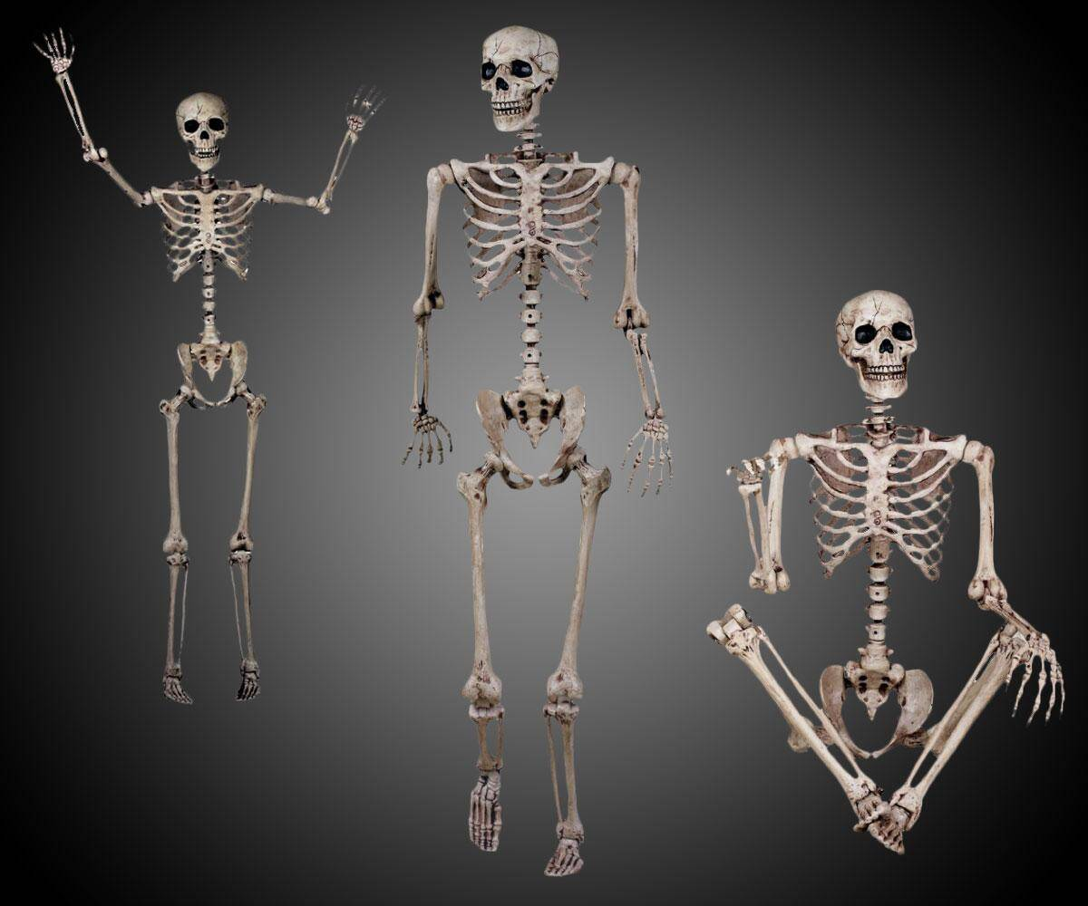 Posable Life Size Skeleton - http://coolthings.us