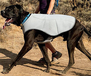 Dog Cooling Vest - http://coolthings.us