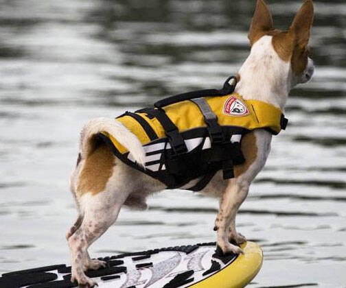 Doggy Life Vest - http://coolthings.us