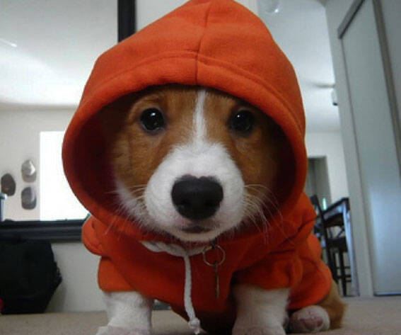 Dog Hoodie - http://coolthings.us