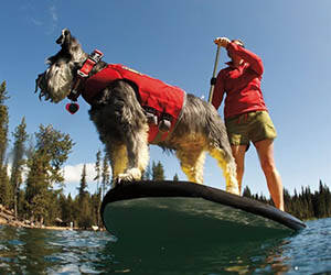 Dog Life Jacket - http://coolthings.us