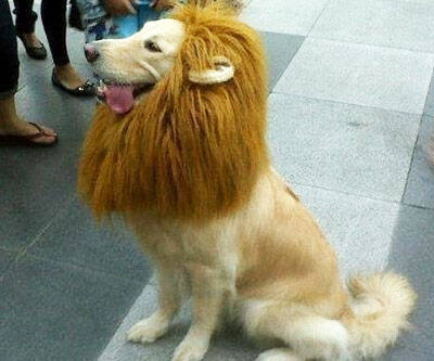 Lion Pet Wig - http://coolthings.us