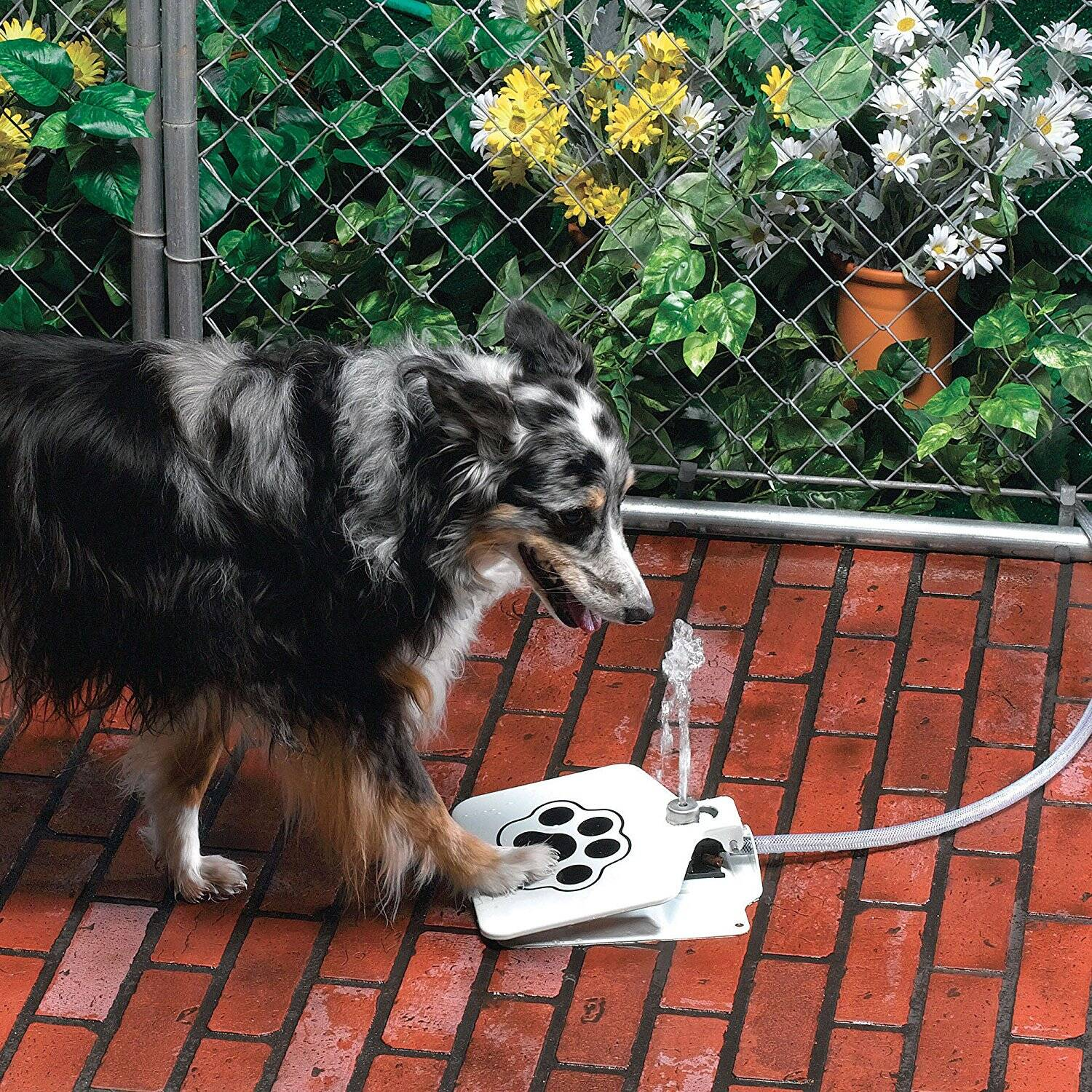 Bow Wow Water Fountain - http://coolthings.us