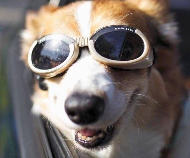 Doggy Goggles - http://coolthings.us