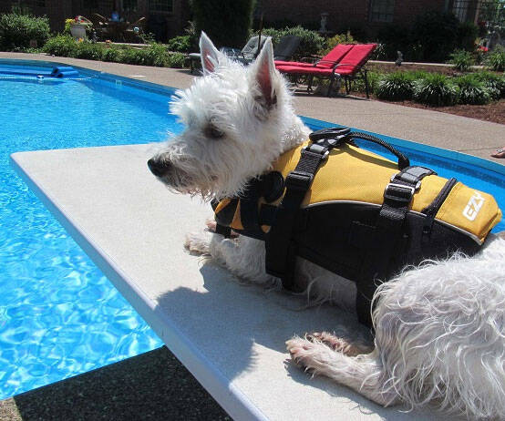 Doggy Floatation Device