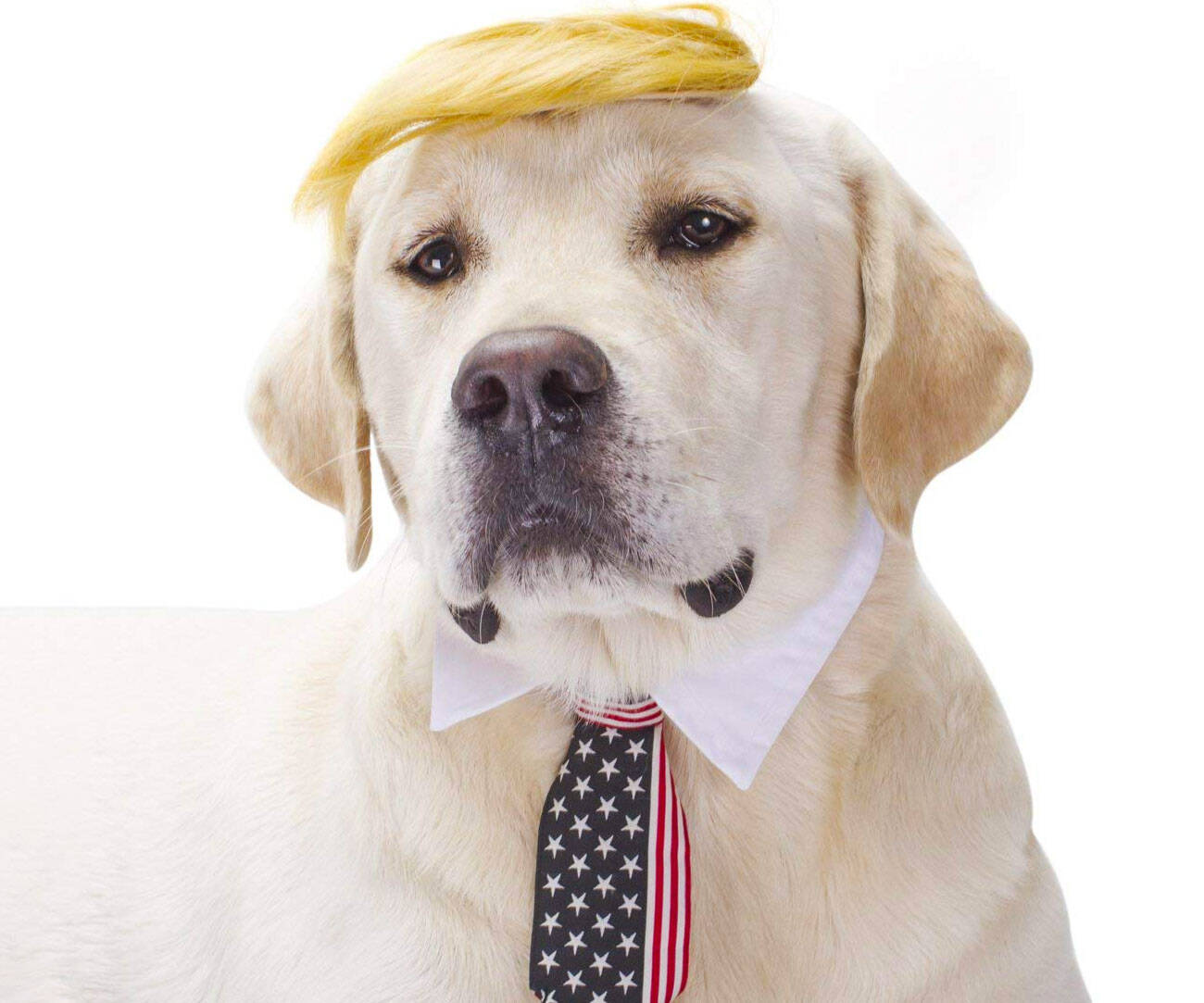 Donald Trump Dog Costume - http://coolthings.us