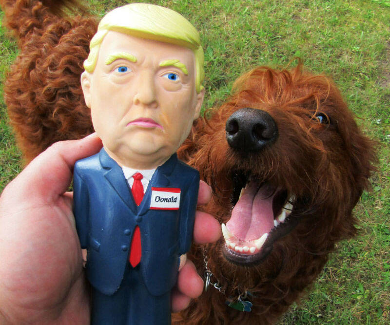 Donald Trump Dog Toy - http://coolthings.us