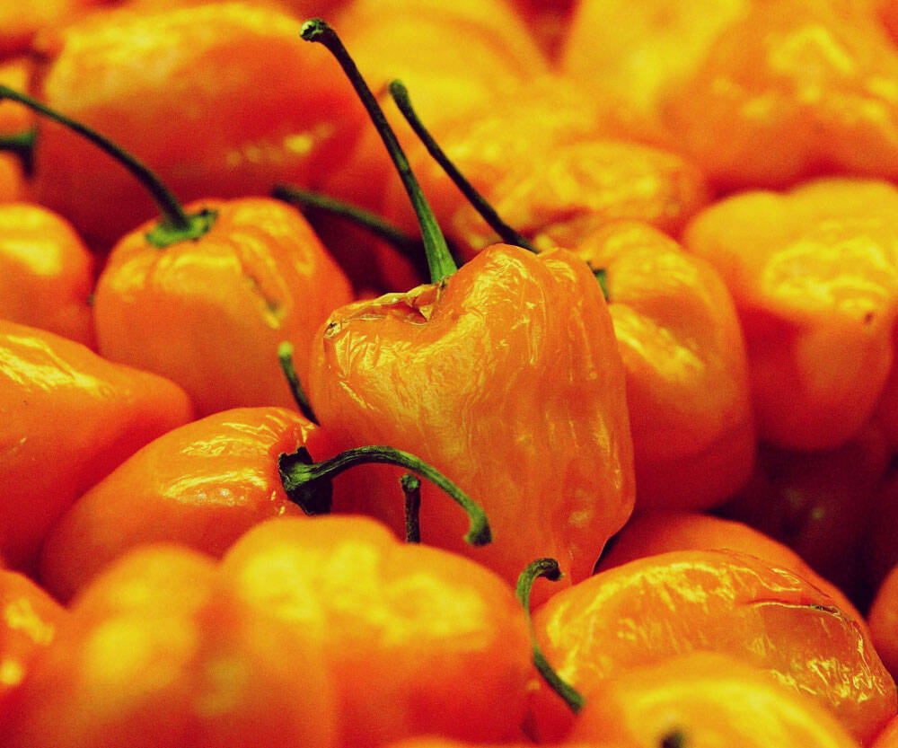 Dragon's Breath Chili Peppers - http://coolthings.us