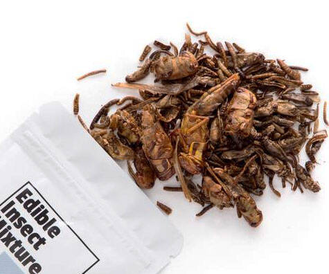 Mixed Bag Of Edible Bugs - http://coolthings.us