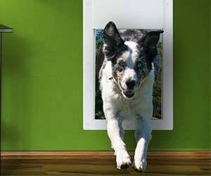 Electronic Doggy Door - http://coolthings.us