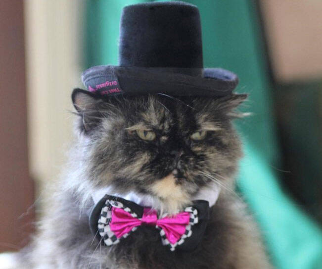 Fancy Cat Top Hat