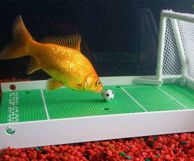Goldfish Soccer Game - http://coolthings.us