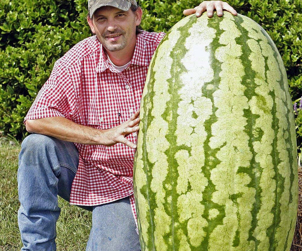Giant Watermelon Seeds - coolthings.us