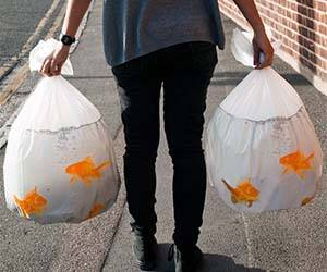Goldfish Garbage Bags - http://coolthings.us