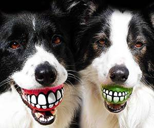Grinning Teeth Dog Toy - http://coolthings.us