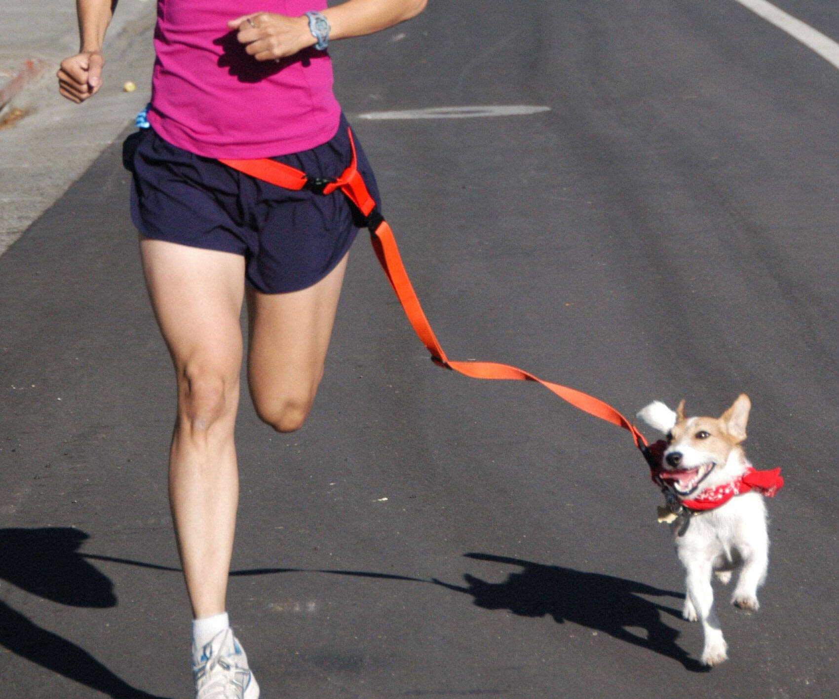 Hands Free Dog Leash - http://coolthings.us