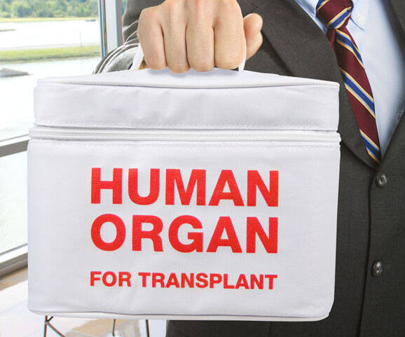 Human Organ Transport Lunch Bag - http://coolthings.us