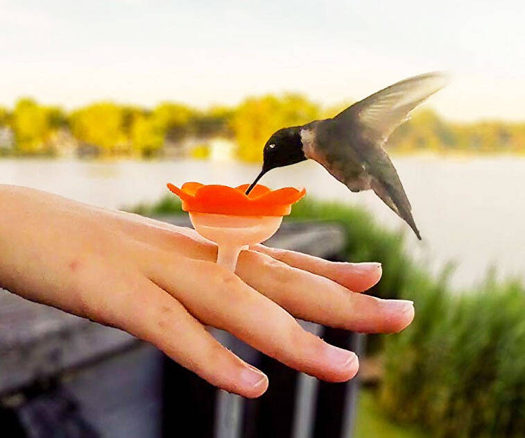 Hummingbird Feeder Ring - http://coolthings.us