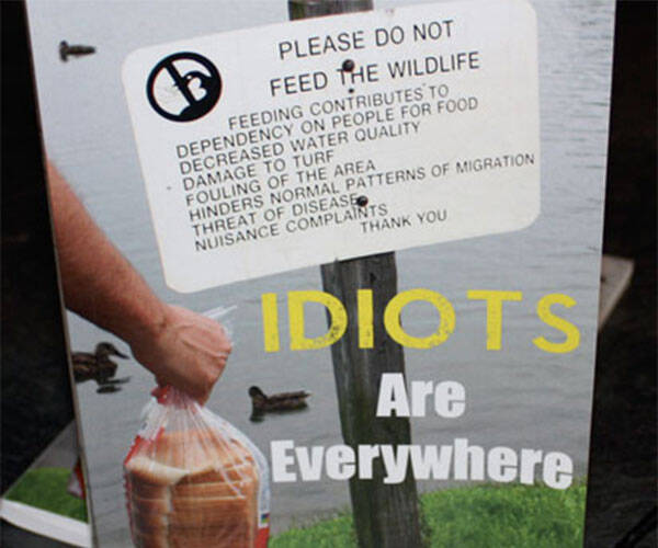Idiots Are Everywhere Book - http://coolthings.us