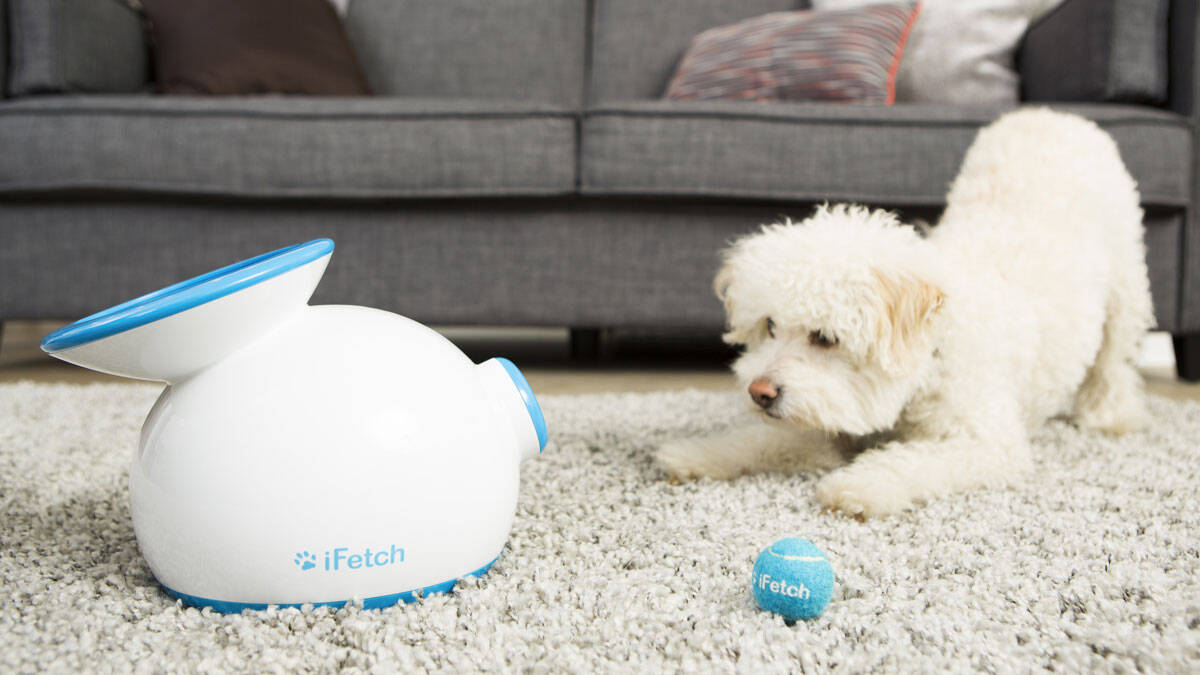 iFetch Automatic Ball Launcher - http://coolthings.us