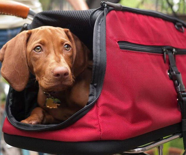 In-Cabin Pet Carrier - http://coolthings.us