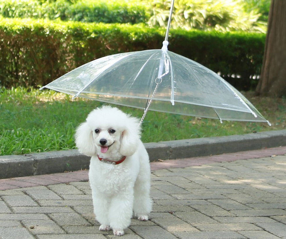 The Dog Umbrella - http://coolthings.us
