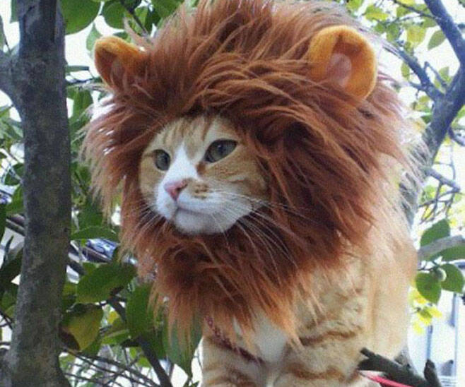Lion Cat Hat - http://coolthings.us