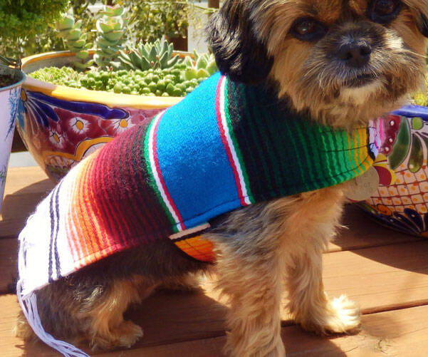 Mexican Dog Ponchos - http://coolthings.us