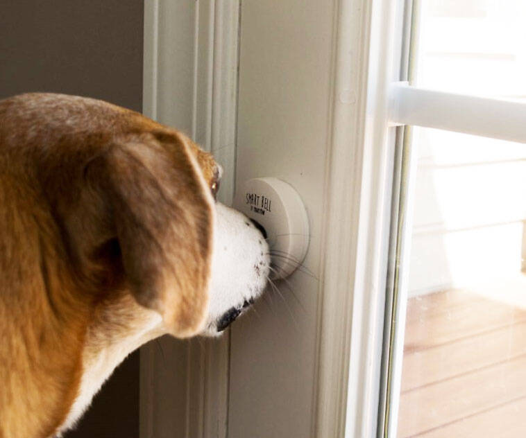 Smart Doggy Doorbell - http://coolthings.us