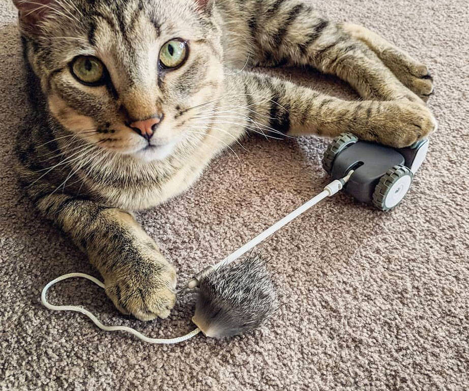 Mousr Robotic Mouse Cat Toy - http://coolthings.us