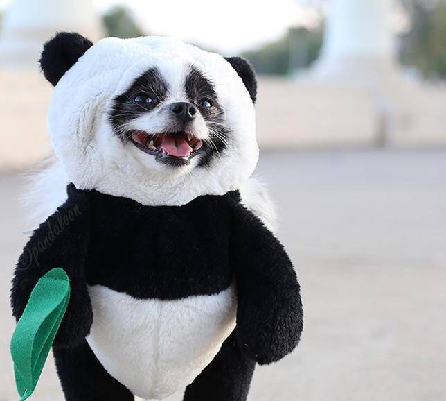 Panda Costume for Dogs - http://coolthings.us