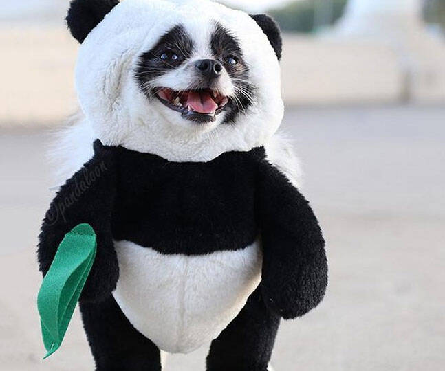Dog Panda Costume - http://coolthings.us
