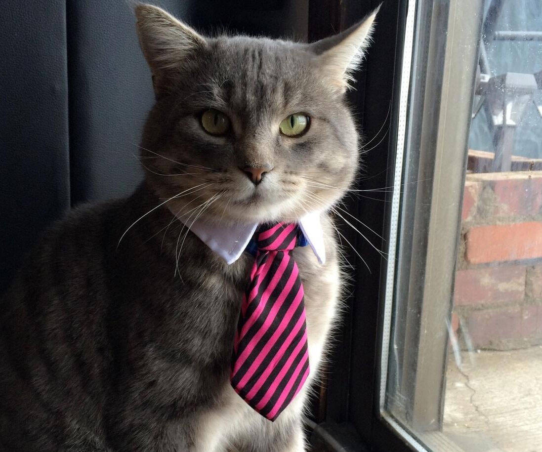 Professional Pet Neck Tie - http://coolthings.us