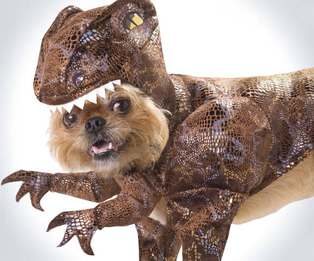 Raptor Dog Costume - http://coolthings.us