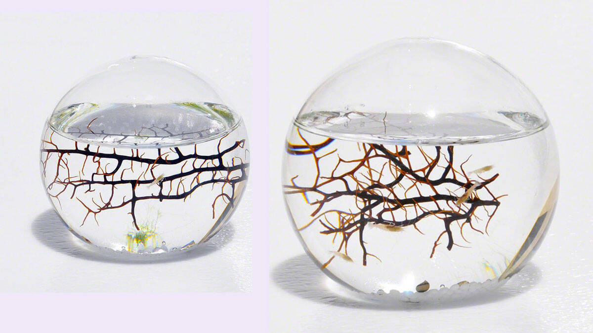 Self Sustaining Ecosphere - http://coolthings.us