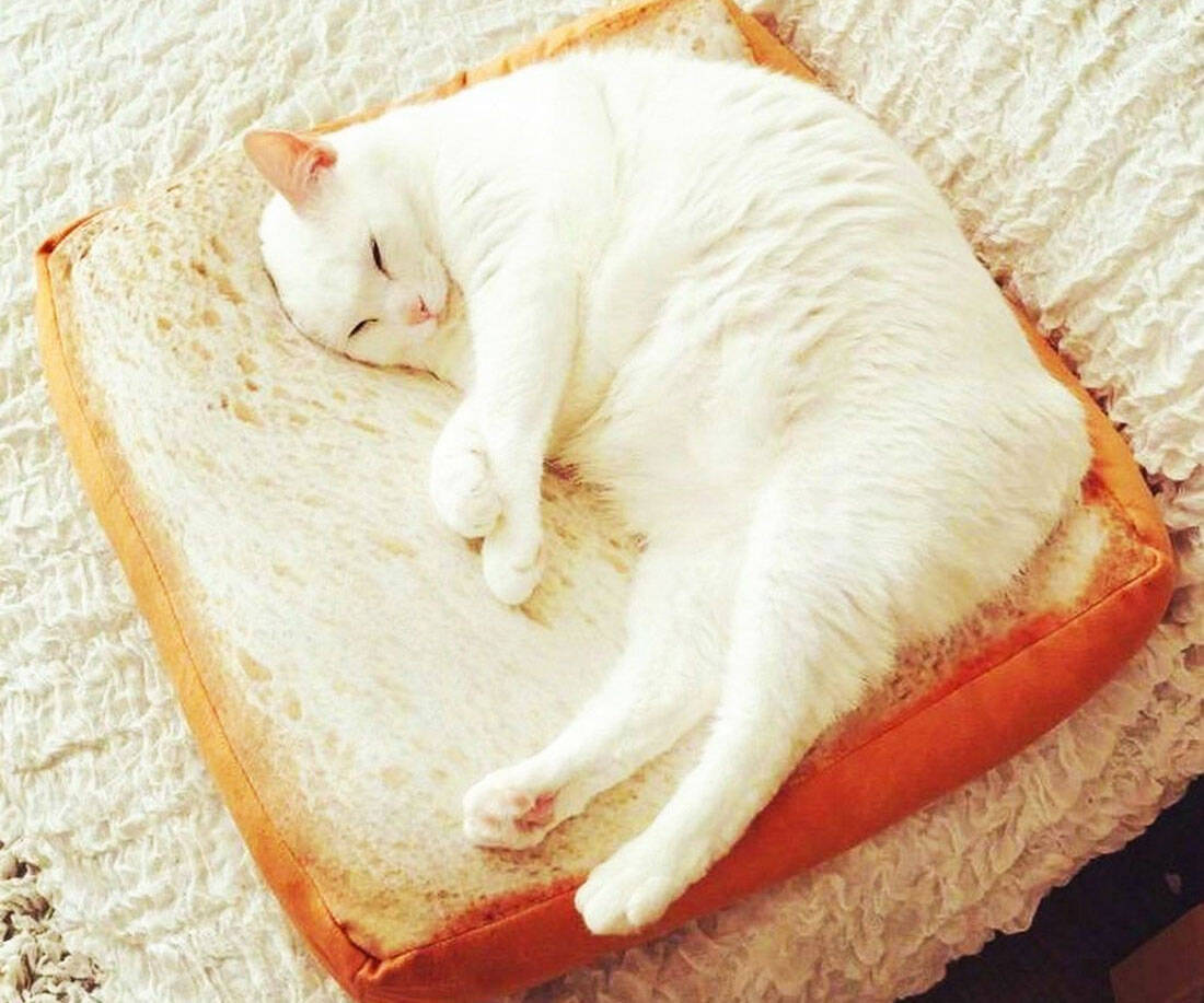 Slice Of Bread Cat Bed - coolthings.us