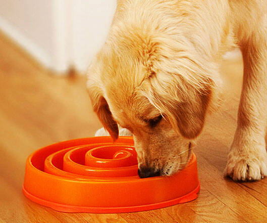 Slow Feed Dog Bowl - http://coolthings.us