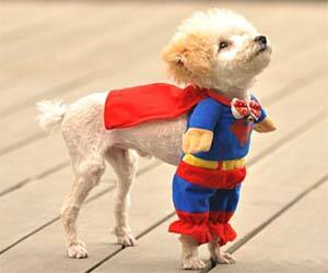 Superman Dog Costume - http://coolthings.us