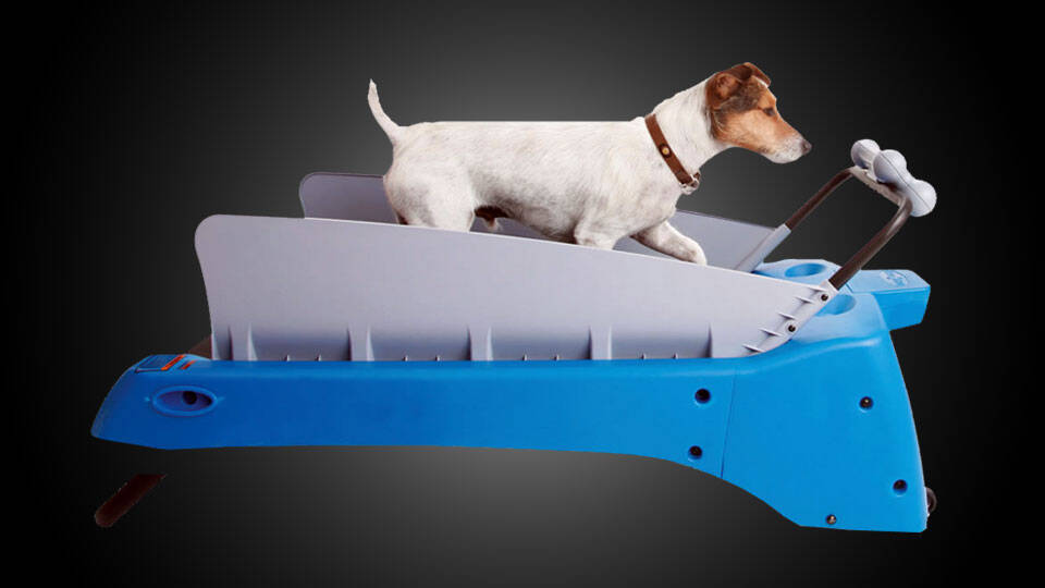 The Dog Treadmill - http://coolthings.us